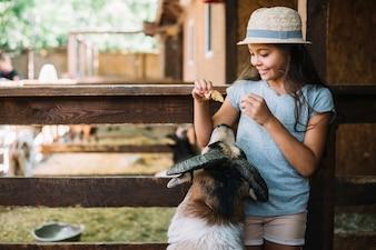 Menina sorridente, ficar, em, celeiro, alimentação, sheep
