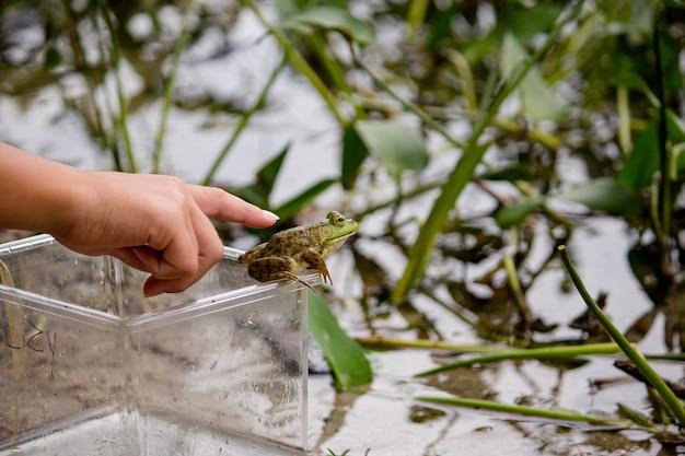 Menina tentando tocar um sapo verde, sentado em uma jarra perto da água