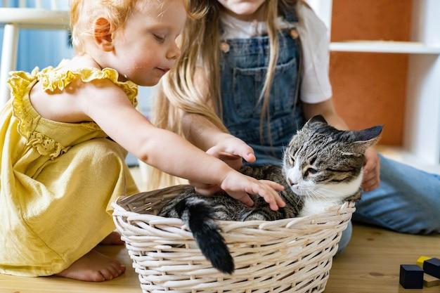 Meninas felizes acariciando o gato engraçado fofo deitado em uma cesta de palha na sala infantil com brinquedos de madeira