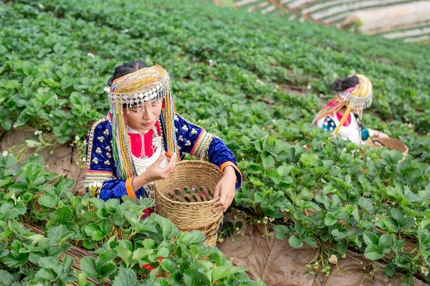 Meninas tribais estão coletando morangos