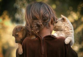 Menininha e cachorrinhos