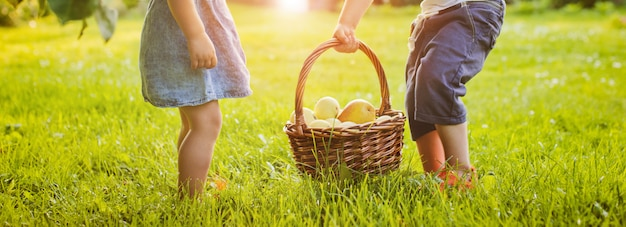 Menininha, segurando, um, cesta, com, maçãs vermelhas
