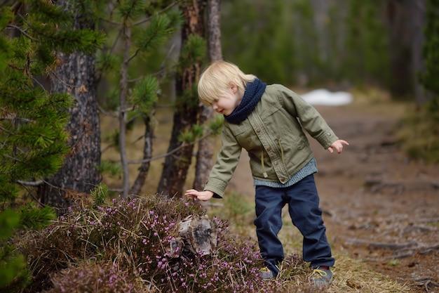 Menino bonitinho examina uma heather bush no parque nacional da suíça na primavera