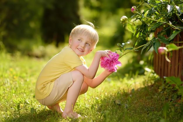 Menino bonitinho olha surpreendentes peônias roxas e brancas no jardim doméstico ensolarado
