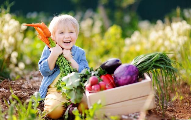 Menino bonitinho segurando um monte de cenouras orgânicas frescas no jardim doméstico