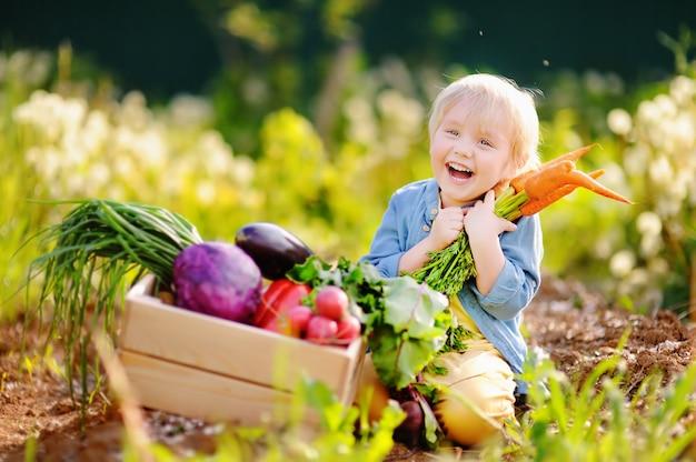 Menino bonitinho segurando um monte de cenouras orgânicas frescas no jardim interno