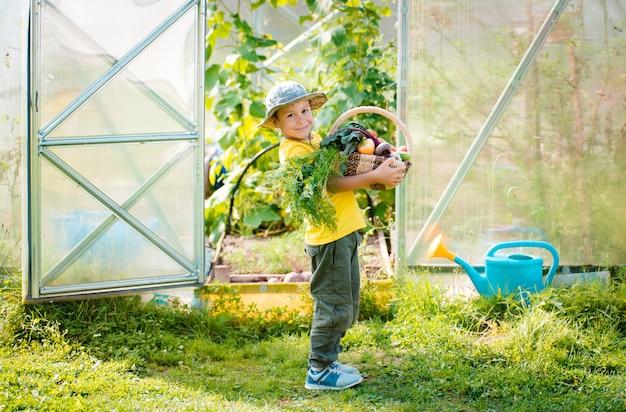 Menino bonitinho segurando um monte de legumes orgânicos frescos no jardim doméstico.