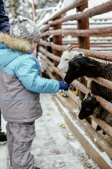 Menino bonito caucasiano alimentando cabra com maçã. animal parado atrás da barreira no zoológico no inverno