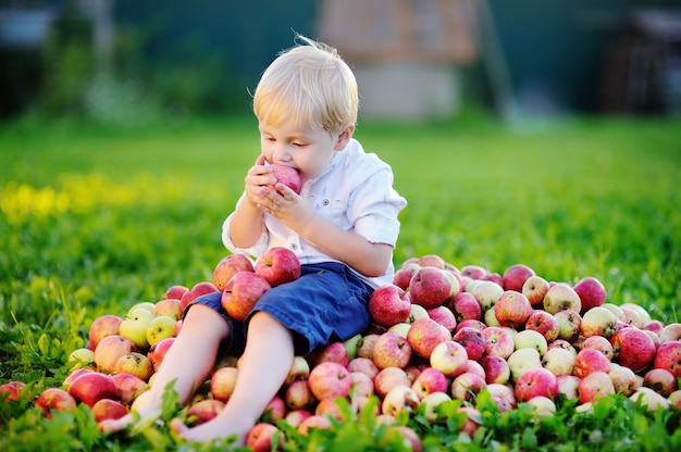 Menino bonito da criança sentada na pilha de maçãs e comendo maçã madura no jardim doméstico