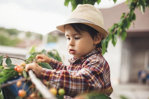 Menino caucasiano comendo cereja fresca de uma árvore cercada por folhas verdes