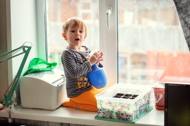 Menino caucasiano de 2 anos regando mudas de um borrifador enquanto está sentado no parapeito de uma janela, preparando mudas para plantar em uma estufa