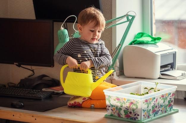 Menino caucasiano de 2 anos regando mudas de um regador enquanto está sentado em uma mesa, preparando mudas para plantar em uma estufa