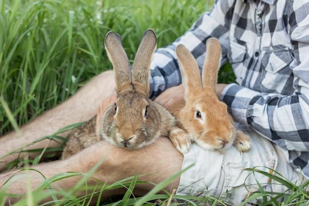 Menino close-up, segurando, coelhos, em, fazenda