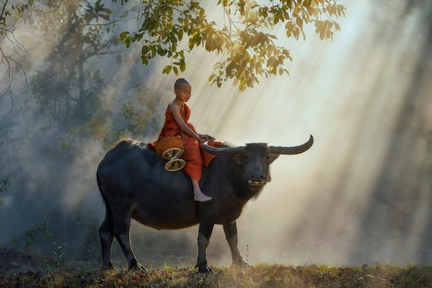 Menino com búfalo na zona rural da tailândia.