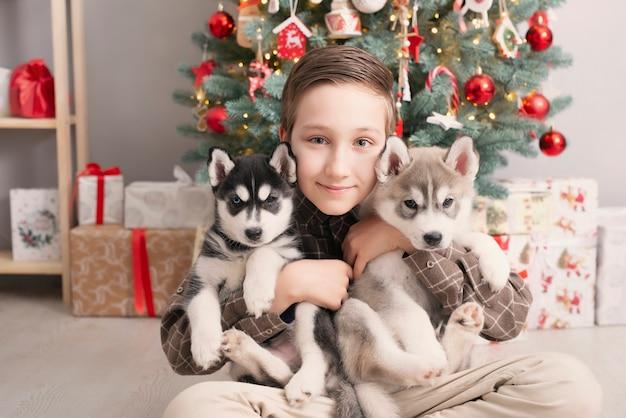 Menino de criança com cachorros husky cachorros e árvore de natal.