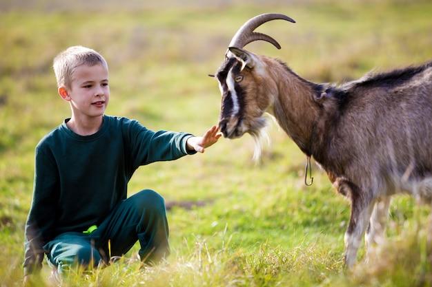 Menino de sorriso bonito bonito loiro jovem criança brincando com cabra barbuda com chifres ao ar livre no verão ensolarado brilhante ou dia de primavera na luz turva - verde gramada.