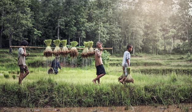 Menino e menina agricultor em campos verdes