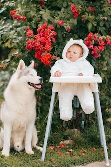 Menino encantador em traje de urso, sentado na cadeira alta com cachorro husky ao ar livre perto de arbustos com flores vermelhas