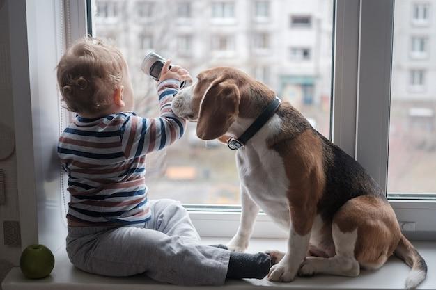 Menino europeu e cachorro beagle sentam e brincam no parapeito da janela da sala