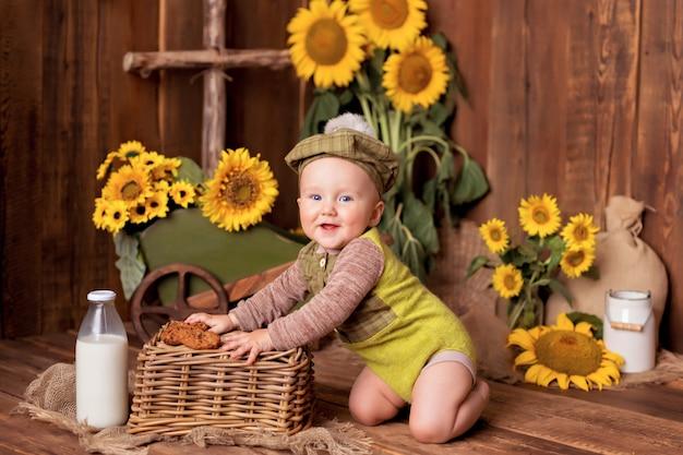 Menino feliz brincando entre girassóis florescendo perto do carrinho. criança comendo biscoitos com leite