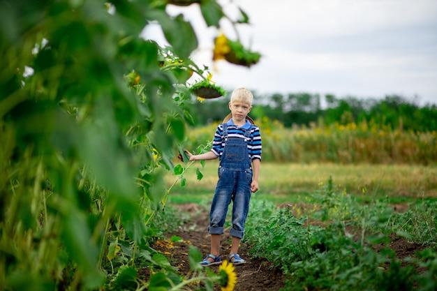 Menino feliz em um campo com girassóis no verão