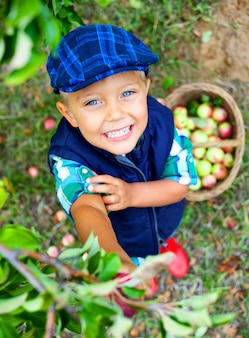 Menino fofo ajudando no jardim e colhendo maçãs na cesta