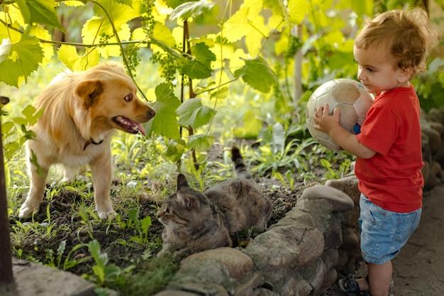 Menino jogando bola com um cachorro e um gato no quintal