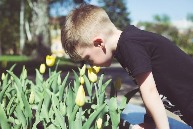 Menino jovem, cheiros, tulips, flor, em, primavera, jardim