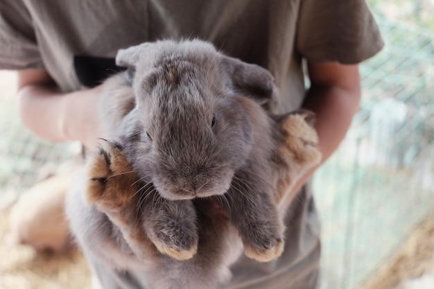Menino jovem, segurando, coelho coelhinho