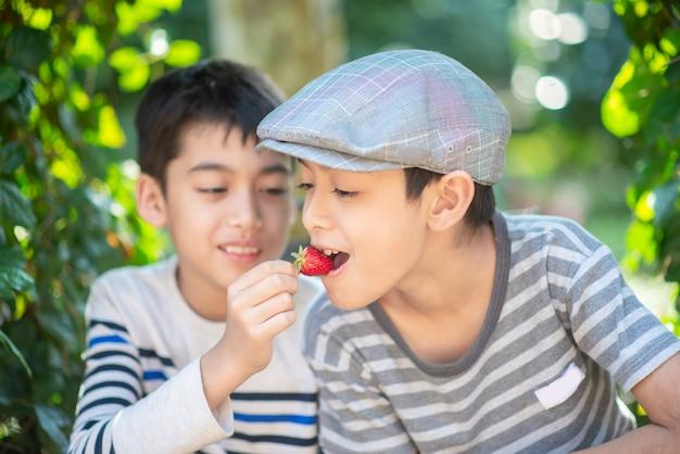 Menino pequeno irmão comendo e lutando enquanto come morango