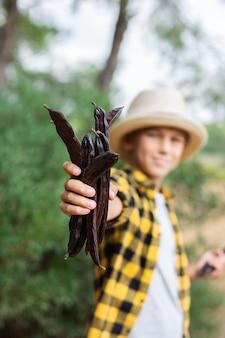 Menino segurando vagens maduras de alfarroba marrom durante a temporada de colheita no campo
