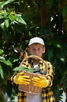 Menino sorridente colhendo abacates