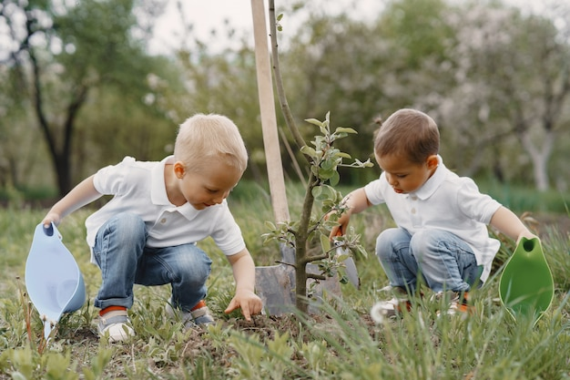 Meninos bonitos plantando uma árvore em um parque