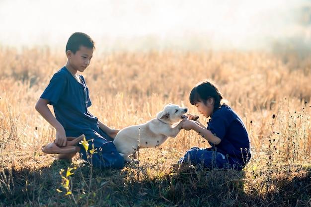 Meninos e meninas, crianças tailandesas fazendeiro brincando com cães em arrozais.