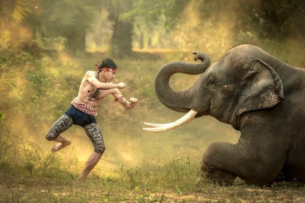 Meninos tailandeses praticando danças de boxe antigas diante dos elefantes, que é uma das artes do povo tailandês.