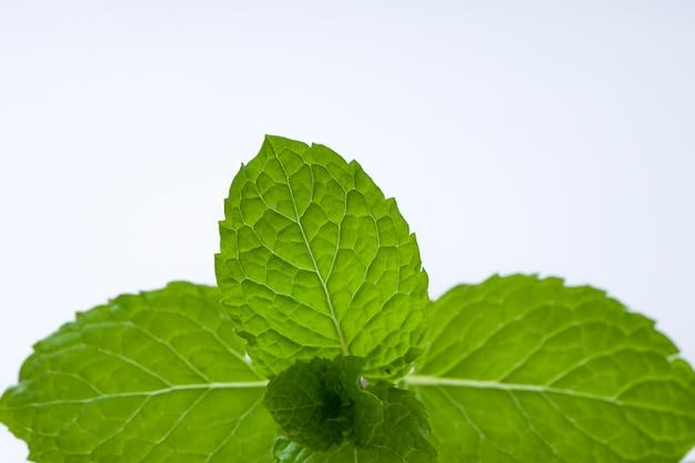 Menta ou pimenta, folha de hortelã verde fresca colocada sobre um fundo branco texturizado, isolado.