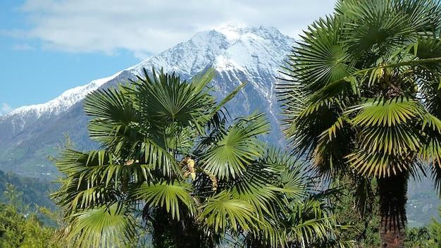 Meran tirol árvores itália palm sul panorama