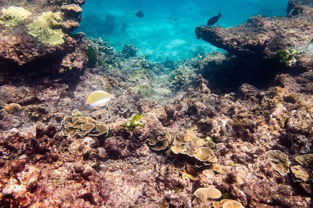 Mergulho com snorkel em um cardume de peixes e recifes de coral em um mar tropical