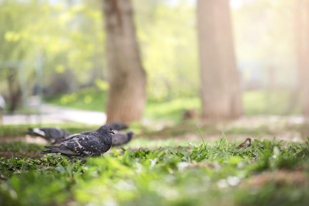 Mergulhou na grama do parque em uma manhã de verão