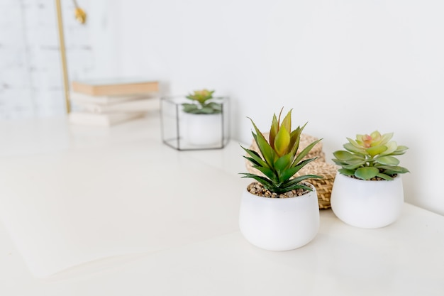 Mesa de escritório ou escritório em casa com plantas decorativas e cactos. mesa de escritório. espaço de trabalho com livros e planta verde suculenta
