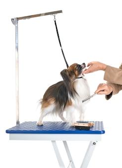 Mesa de grooming e cachorrinho