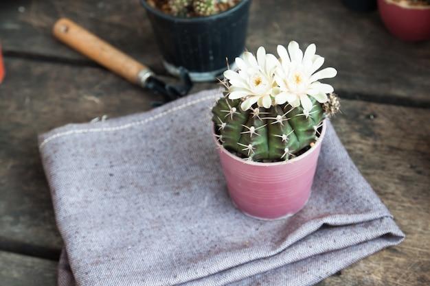 Mesa de pote seedling hand dirt gardener
