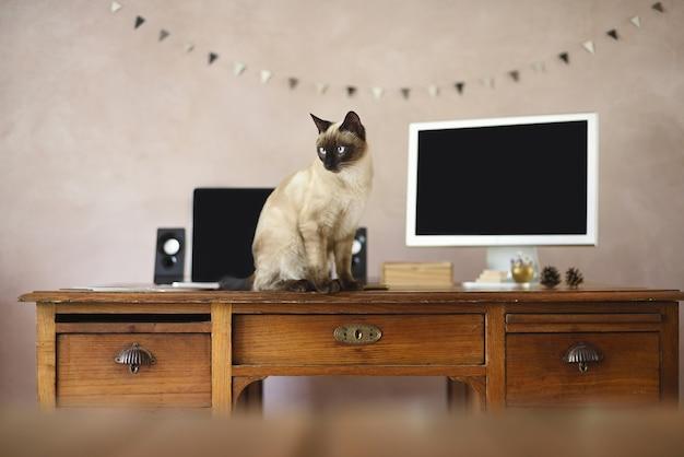 Mesa de trabalho com telas de laptop e mascote da casa