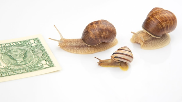 Metáfora para alcançar o sucesso financeiro nos negócios. caracóis correm em uma pista de corrida pela riqueza. perseverança no trabalho e tempo para vencer. conceito de exibição de competição de negócios