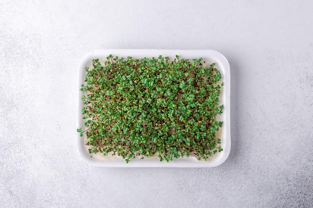 Micro closeup de verdes frescos. brotos de mostarda microgreen. microgreens crescendo. conceito de alimentação saudável. vista do topo
