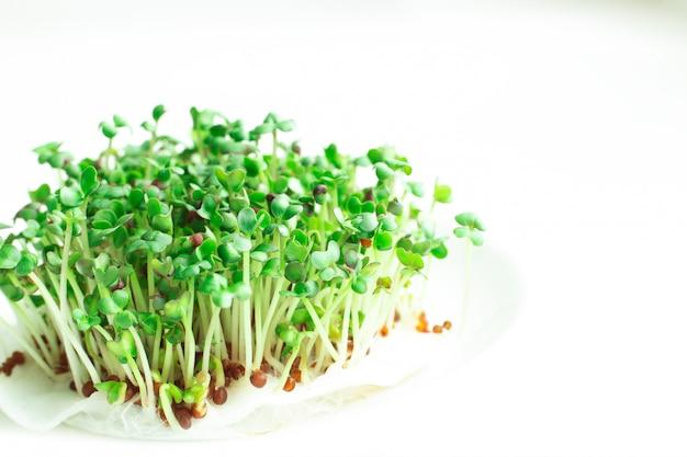 Micro closeup de verdes frescos. brotos de mostarda microgreen. microgreens crescendo. conceito de alimentação saudável.