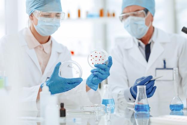 Microbiologistas estudam bactérias em uma placa de petri