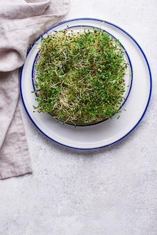 Microgreen brotos de alfafa. comida saudável