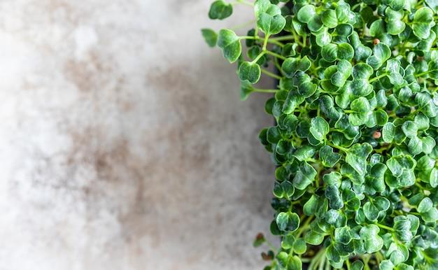 Microgreen brotos de rabanete daikon em uma bandeja preta microgreen orgânico para uma alimentação saudável