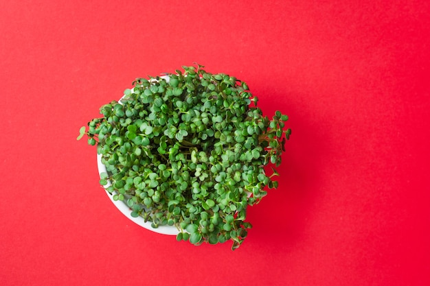 Microgreen mostarda ou rabanete erva pétalas verdes nutrição dieta adequada
